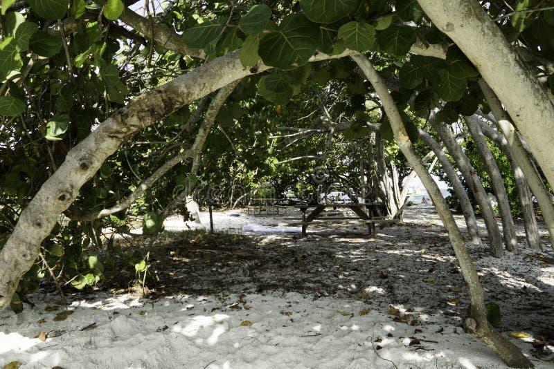 Mangroves na Chave do Jantar no Grove de Coco imagem de stock