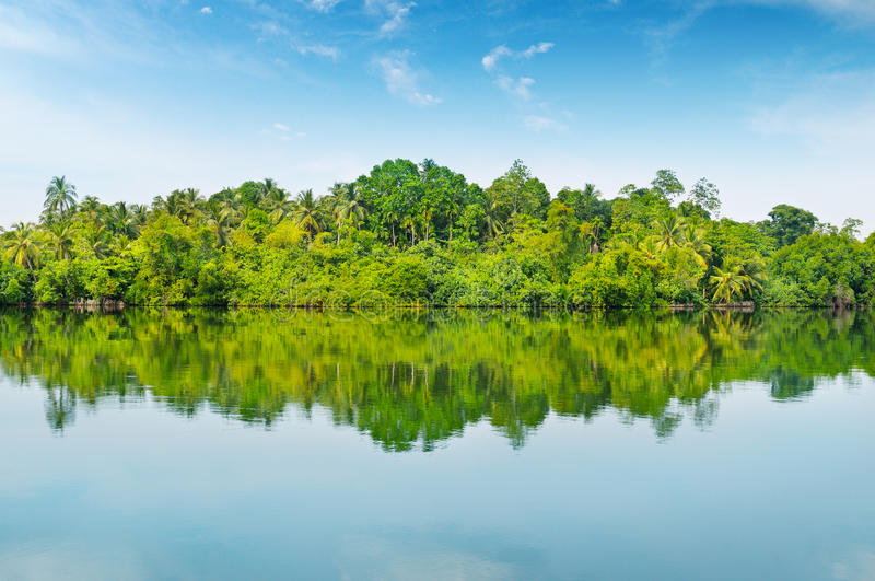 Download Mangroves and  sky stock photo. Image of blue, forest - 37748230