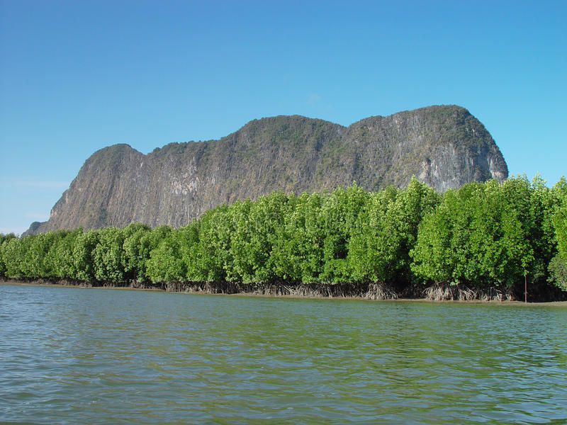 Mangroves in Thailand stock photos