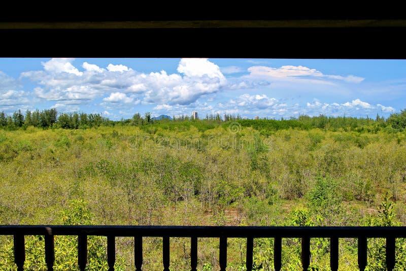 Mangroveskog, huahin, torn arkivbild