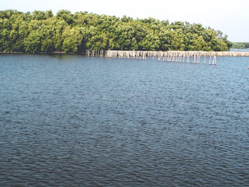 Mangroveskog, sikt från vattnet Naturräddningvärld royaltyfri fotografi