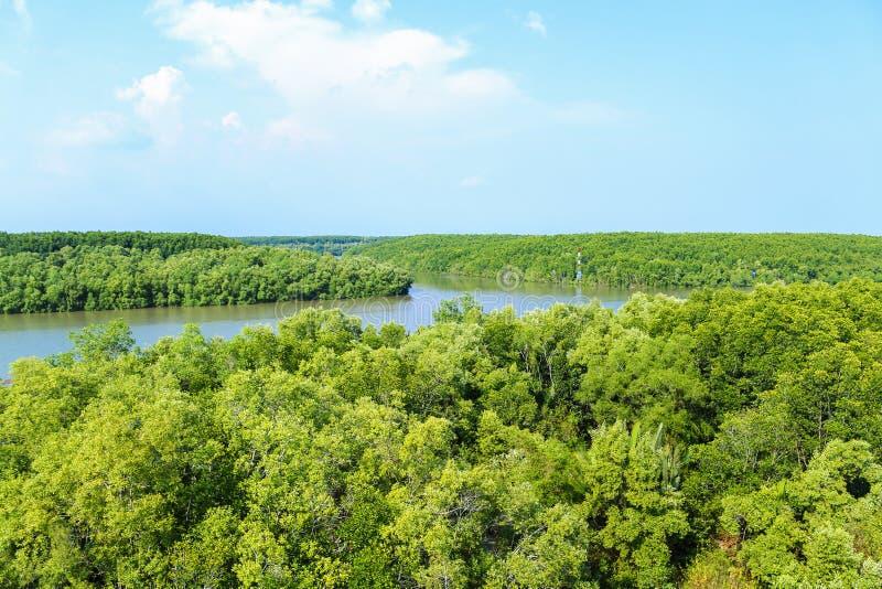 Mangroveskogen i området kan Gio - Vietnam arkivbilder