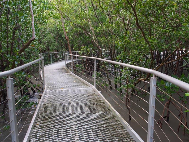 Mangrovestrandpromenad, östlig punktreserv, Darwin, Australien arkivbilder