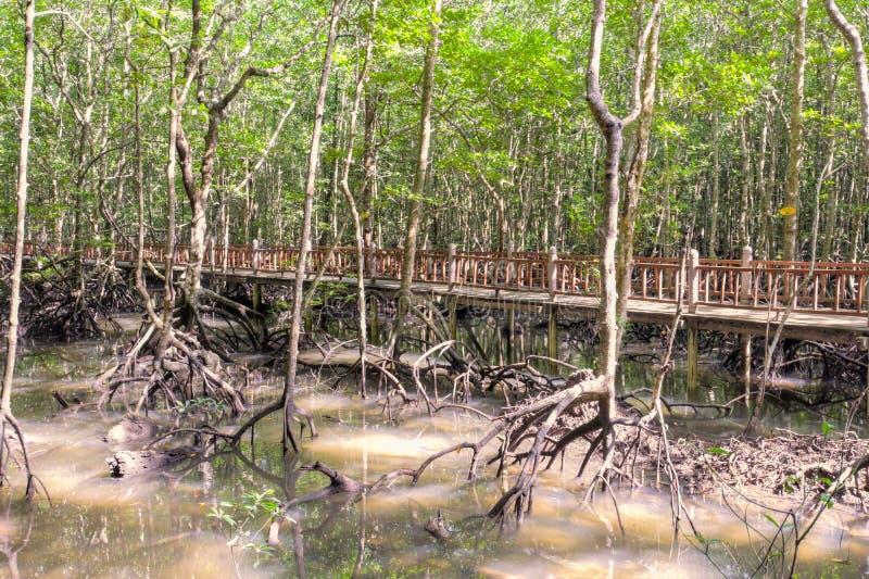 Mangroveswamp royaltyfri fotografi