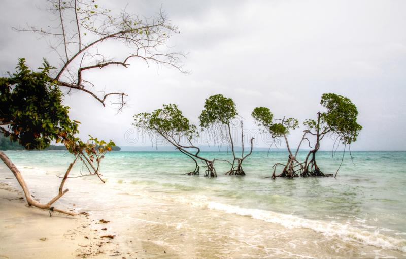 Mangroveträd Emerald Green bevattnar det Andaman havet på disig dag arkivfoto