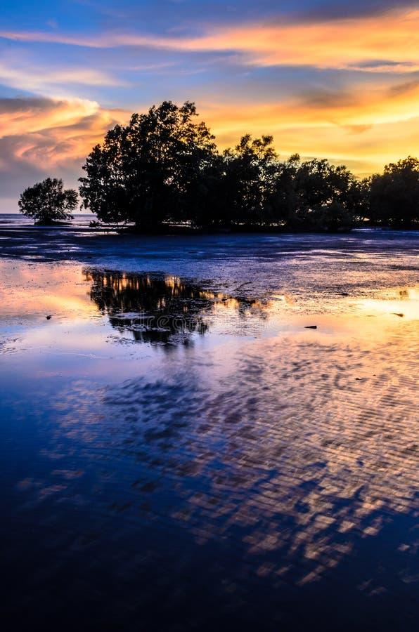 Mangrovia fotografia stock