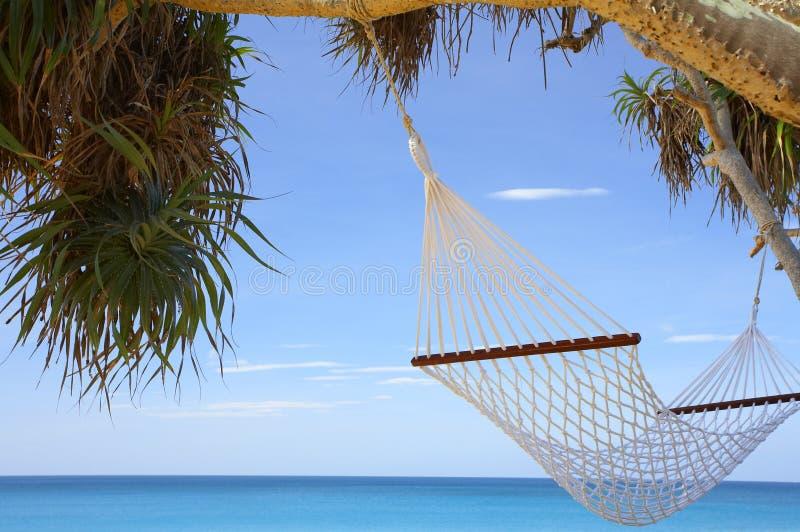 Download Mangrovia e hammock fotografia stock. Immagine di azzurro - 3889962