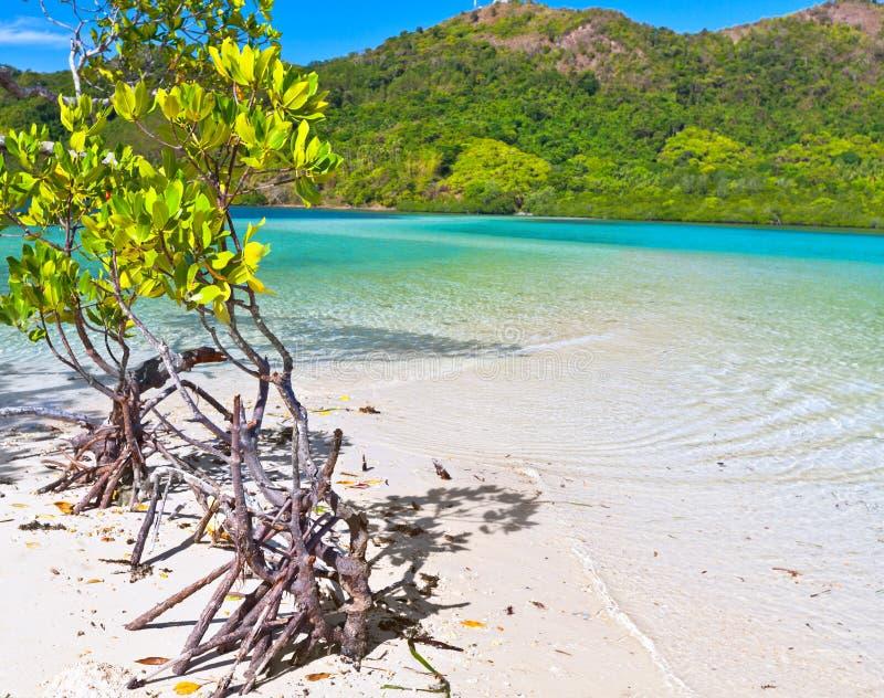 Mangrovie immagini stock libere da diritti