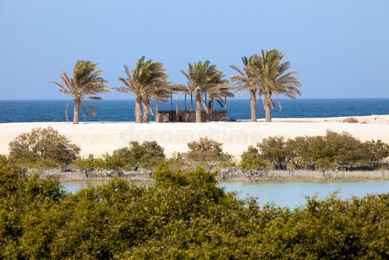 Mangrovie e palme sull'isola di Sir Bani Yas, UAE immagini stock libere da diritti