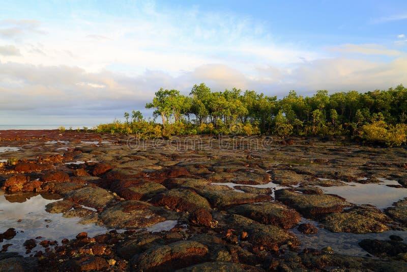 Mangrovie e stagni della roccia fotografia stock libera da diritti