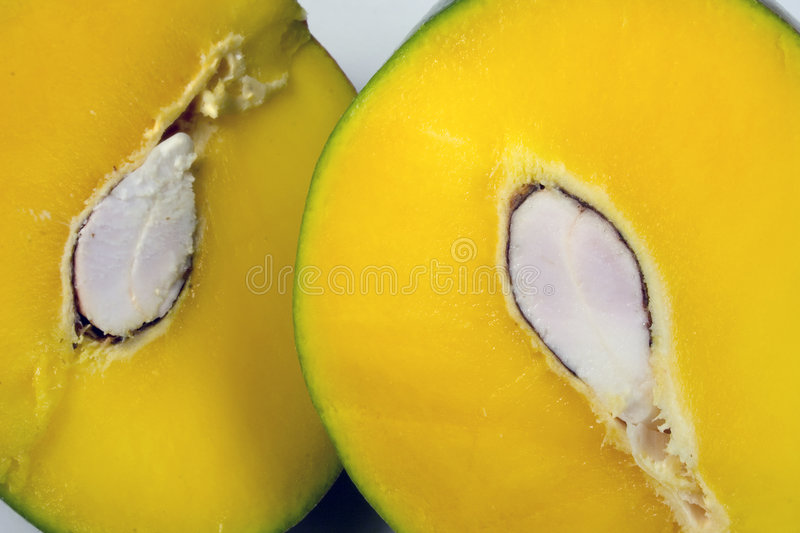 Mangue photo stock