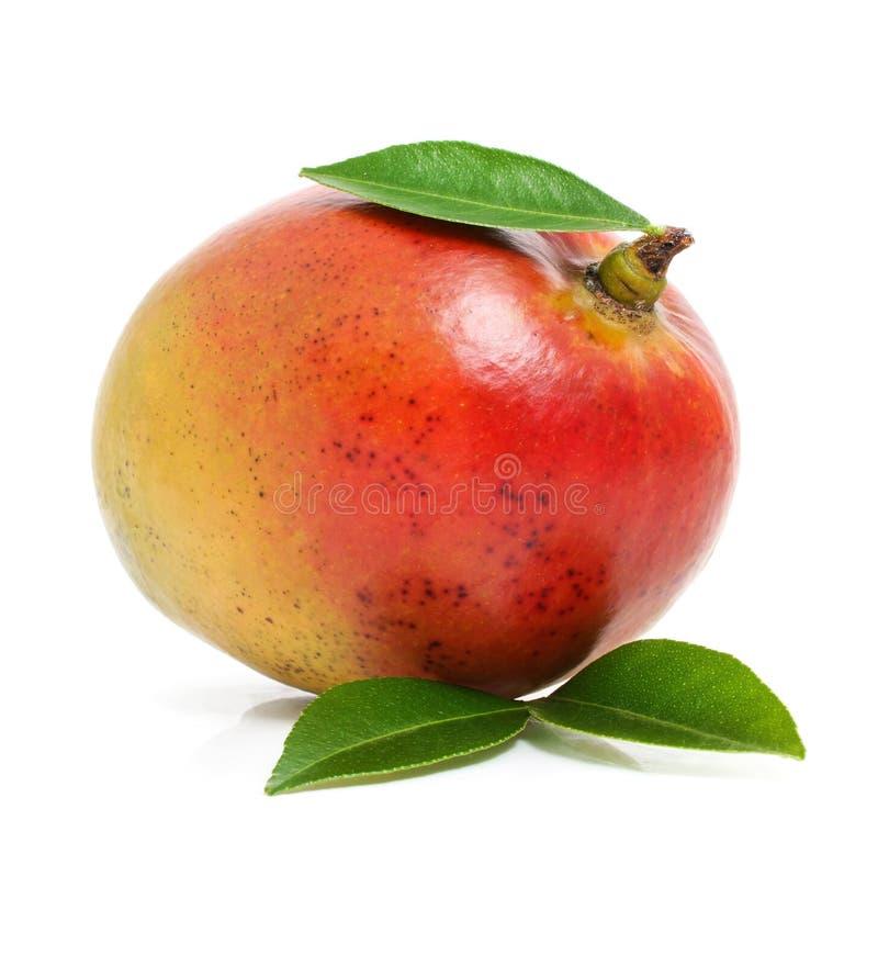 mangue de lames d'isolement par vert de fruit frais photos libres de droits