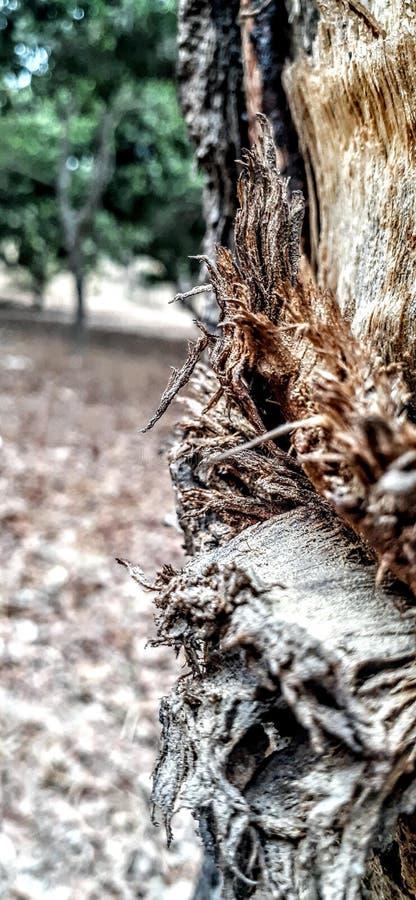 Mangue en bois de village d'arbre photo libre de droits