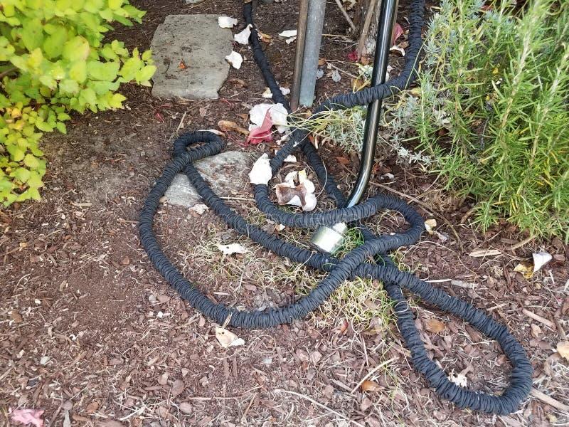 Mangueira de jardim flexível preta na palha de canteiro marrom imagem de stock royalty free