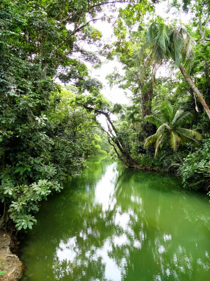 Manguezais da floresta úmida, Costa Rica foto de stock