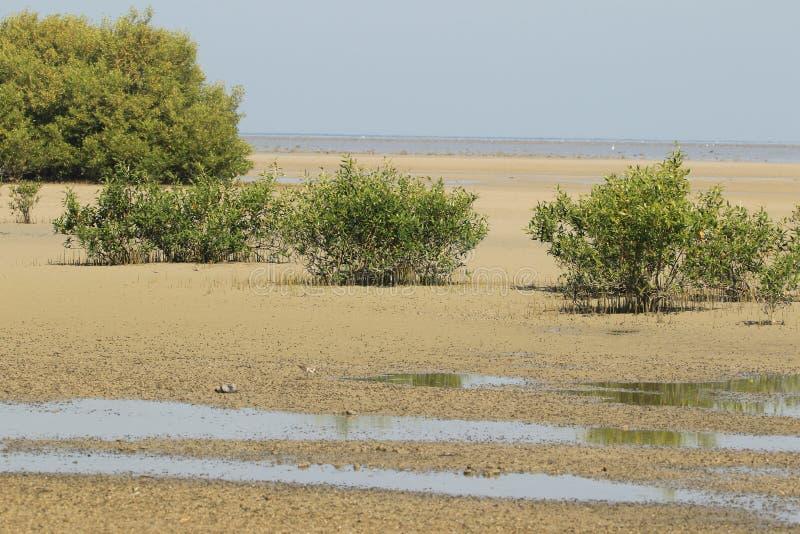 Manguezais em Jamnagar Marine Park quando a maré estiver para fora imagem de stock royalty free