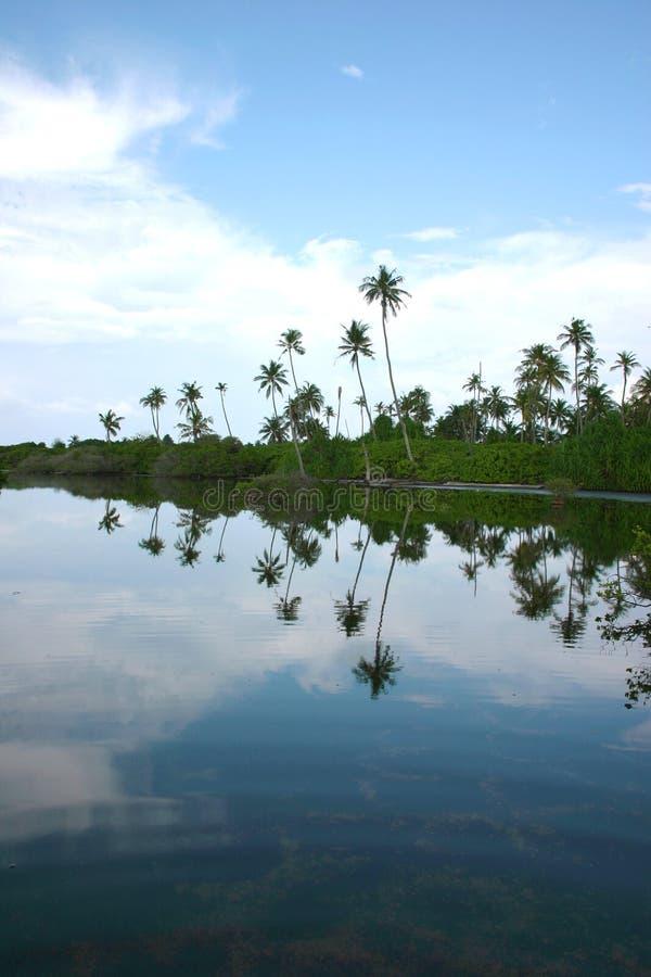 Manguezais no hithadhoo do Atoll de Addu (Maldives) fotografia de stock