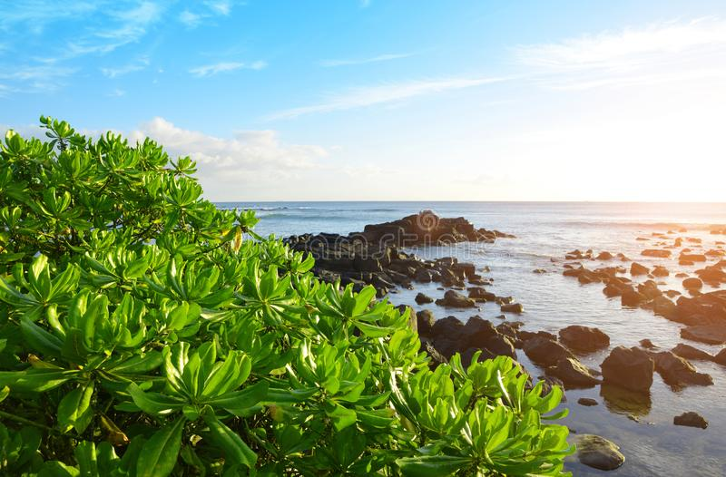 Manguezais no litoral ocidental da ilha de Maurícias no por do sol foto de stock royalty free