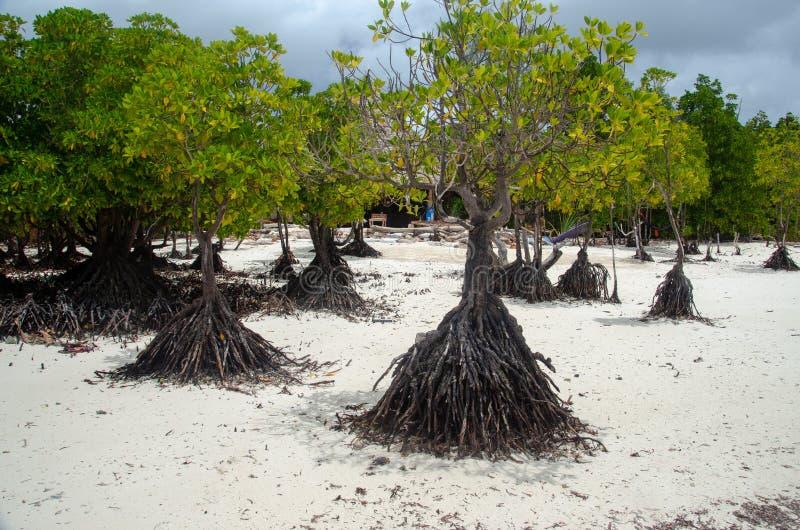 Manguezais Zanzibar, Tanzânia, em fevereiro de 2019 fotos de stock royalty free