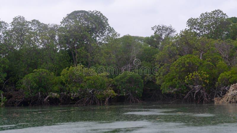Manguezais Zanzibar, Tanzânia, em fevereiro de 2019 imagem de stock