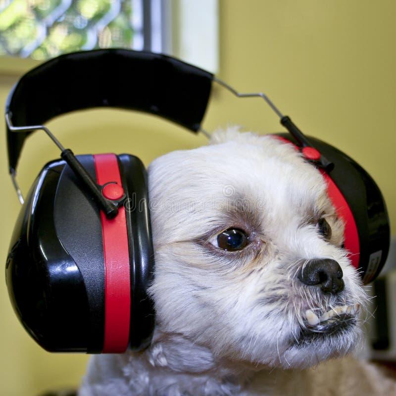 Manguitos protectores del oído fotos de archivo