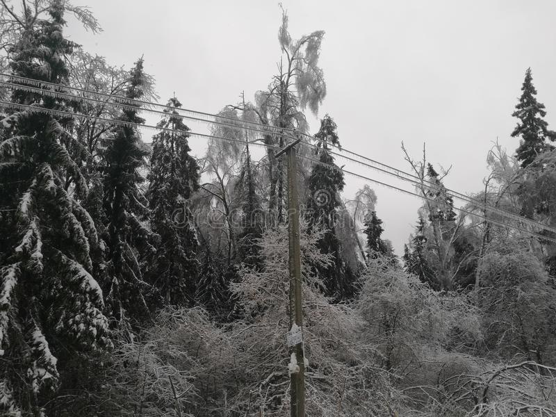 Manhã após a chuva de congelação foto de stock royalty free