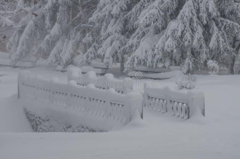 Manhã após uma queda de neve no parque foto de stock