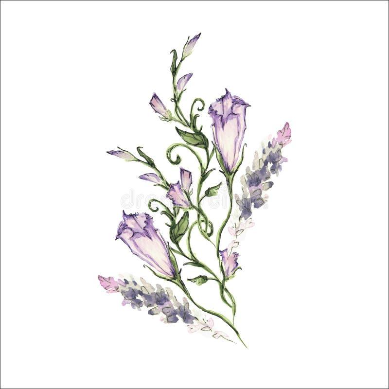 Manhã cor-de-rosa Glory Field Bindweed, flores do arvensis do convólvulo ilustração do vetor