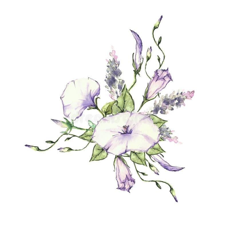 Manhã cor-de-rosa Glory Field Bindweed, flores do arvensis do convólvulo ilustração stock