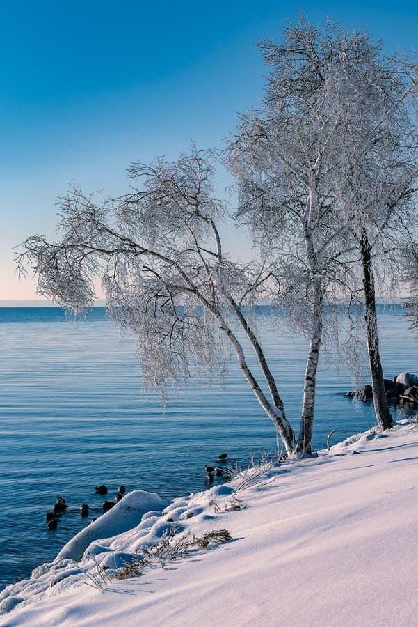 Manhã de congelação no Lago Ontário foto de stock royalty free