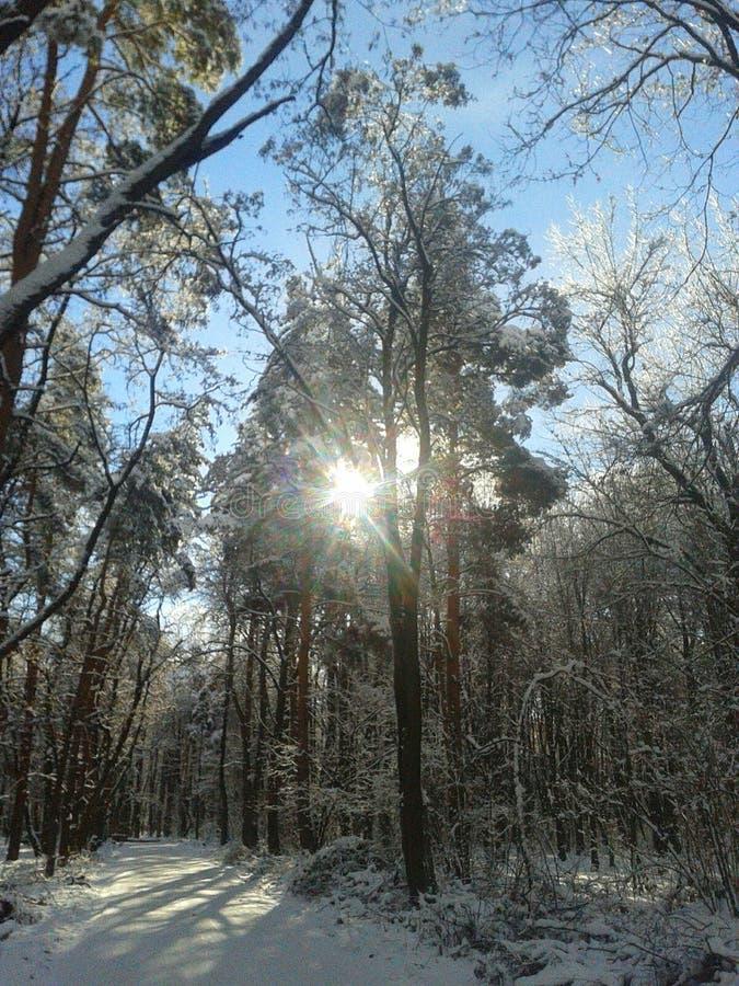 Manhã de Frosty January no parque fotografia de stock royalty free