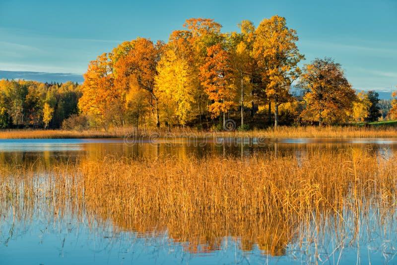 Manhã de outubro na Suécia fotos de stock royalty free