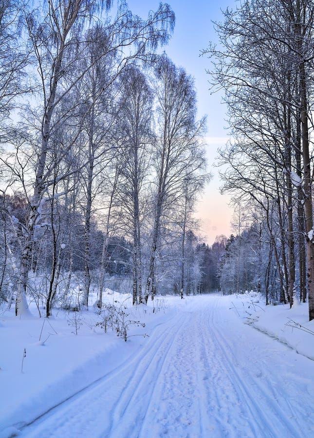 Manhã delicada em uma estrada de floresta - paisagem do rosa do inverno do inverno imagem de stock