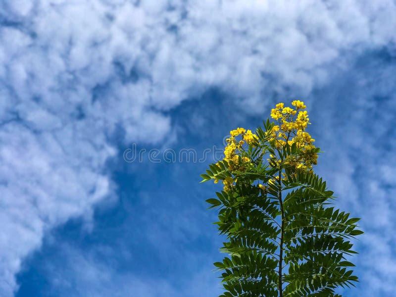 Manhã do céu azul do amarelo da nuvem das flores imagem de stock