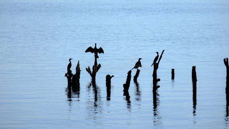 A manhã do começo de uma vida nova dos animais que vivem neste mar lá é uma variedade de ecossistemas e modos de vida no thi fotografia de stock