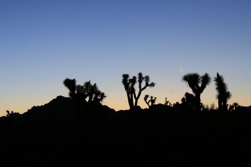 Manhã do deserto fotografia de stock