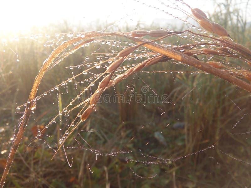 Manhã do inverno foto de stock royalty free