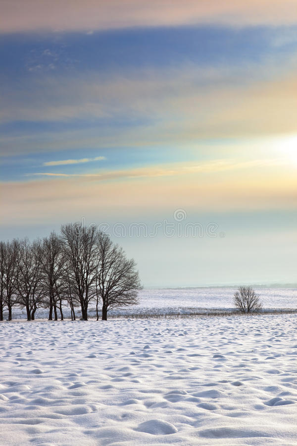 Manhã do inverno foto de stock