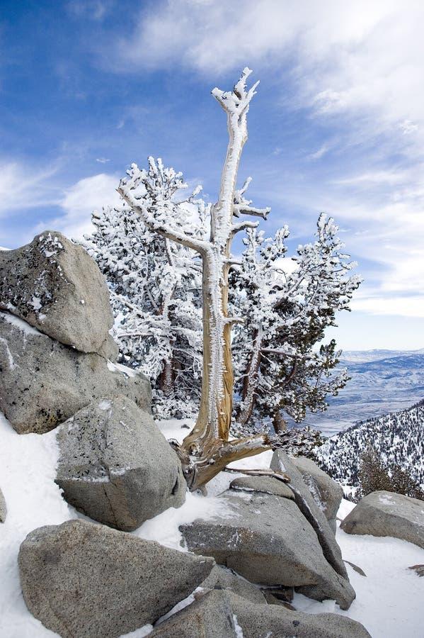 Manhã do inverno fotografia de stock royalty free