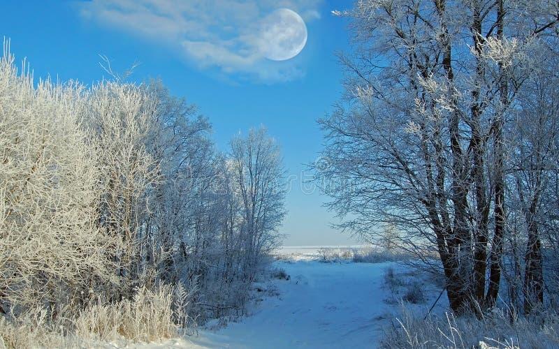 Manhã do inverno imagem de stock