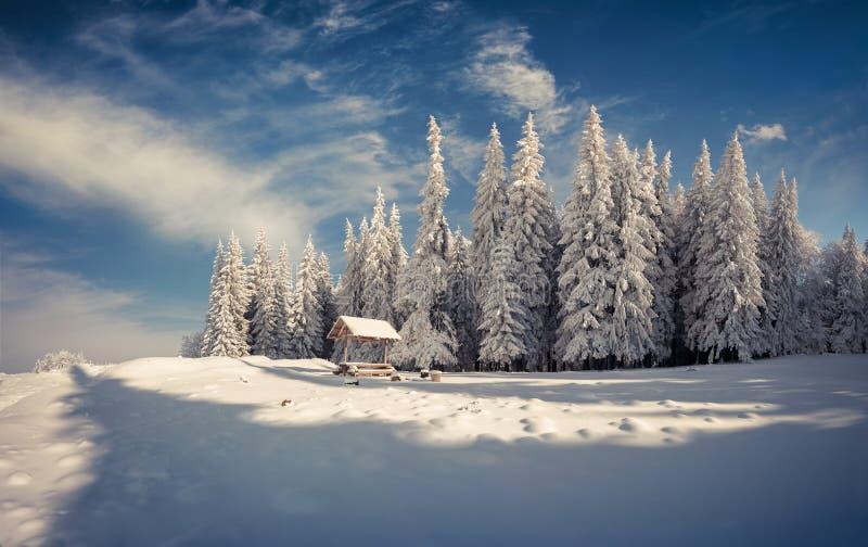 Manhã do inverno após a queda de neve pesada na floresta da montanha fotografia de stock royalty free