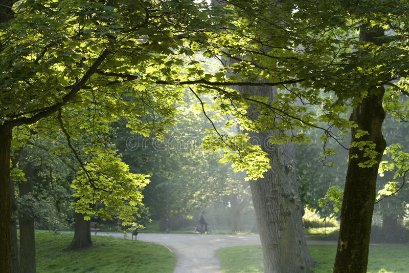 Manhã do verão no parque imagens de stock royalty free