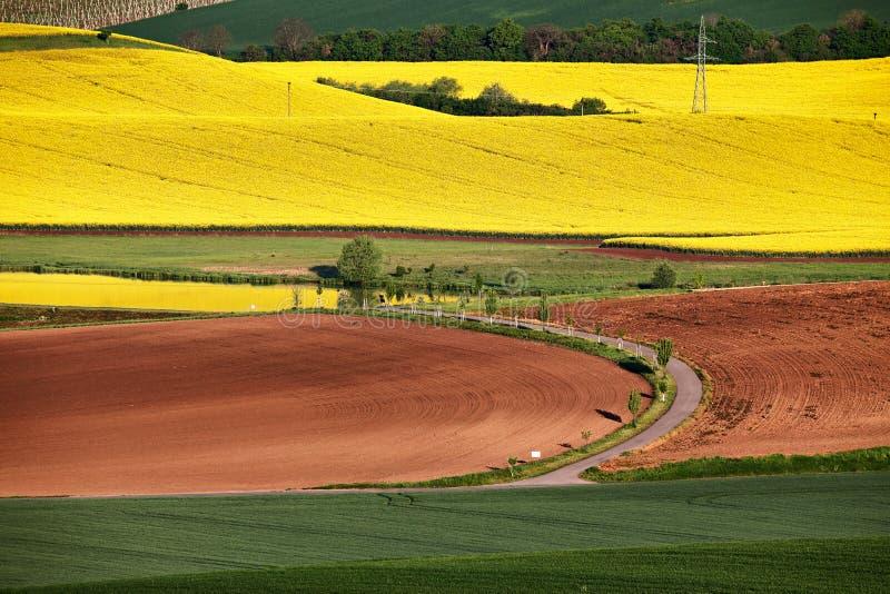 Manhã em campos verdes e amarelos da mola fotos de stock royalty free