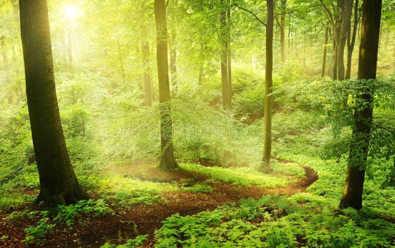 Manhã em uma floresta verde do verão fotos de stock royalty free