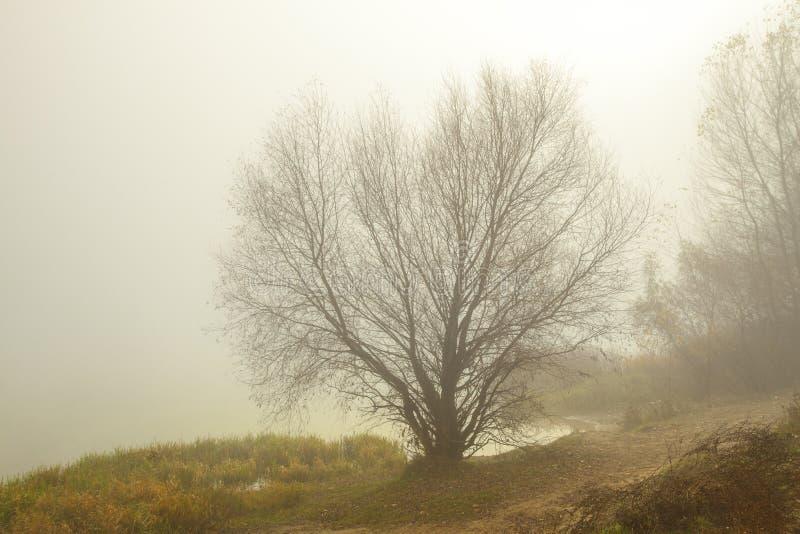 Manhã enevoada no lago Árvores e grama perto da água imagens de stock