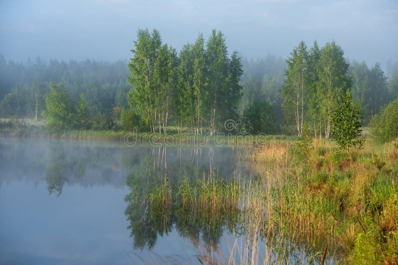 Manhã enevoada pelo lago fotografia de stock