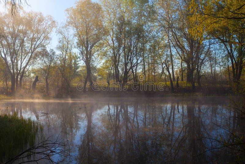 Manhã enevoada sereno em uma beira do lago foto de stock royalty free
