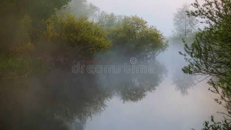 Manhã enevoada sobre o rio fotos de stock