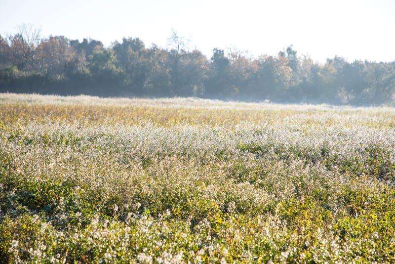 Manhã ensolarada bonita sobre o campo no inverno fotos de stock royalty free