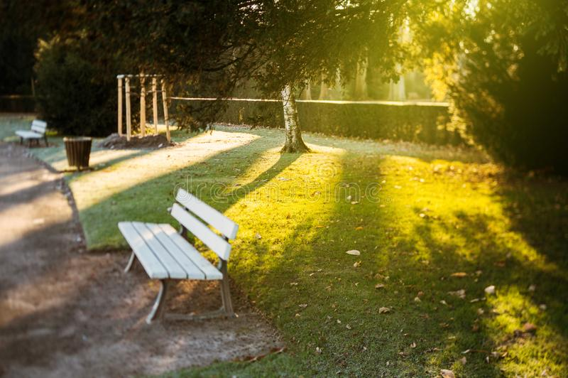 Manhã ensolarada no parque do inverno com banco vazio foto de stock royalty free